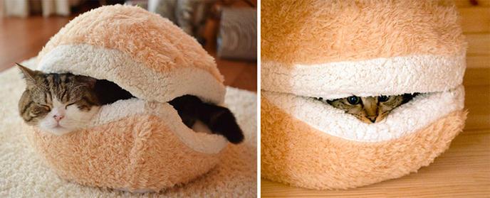 Des meubles pour chat la fois utiles et designs cuboak - Comment empecher un chat d uriner partout ...