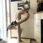 chat jeu arbre