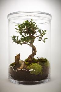 terrarium Bonsai