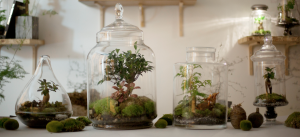 terrariums design déco