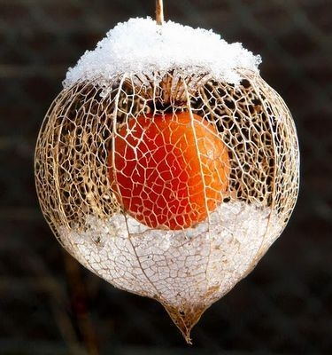 neige amour en cage